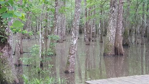 springfling swamp